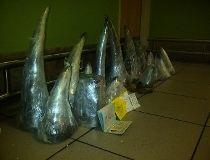Rhino horns AFP