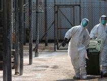H7N9 bird flu