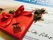 Valentine's Day cockroach