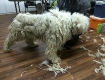 Dog seized