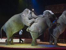Generic circus elephants (650x366) 7 ways