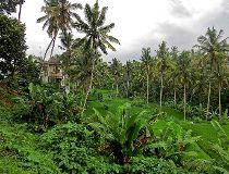 Town of Ubud