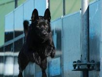 Lucas police dog