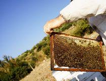 Beekeeper, bee hive
