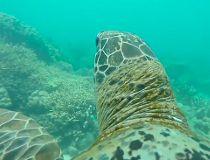 WWF turtle
