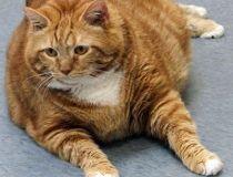 Skinny, the cat