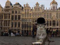 Brussels Cat