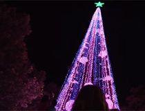 Australia Christmas tree