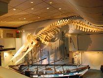 Nantucket's Whaling Museum_4
