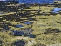 Dinosaur tracks in Scotland