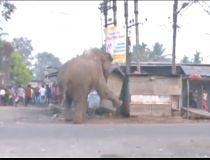 Elephant smash