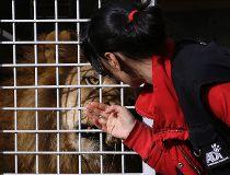 lion rescue
