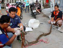 Toilet python
