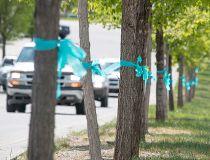blue ribbons for injured girl