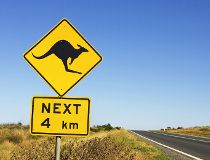 Kangaroo crossing Getty