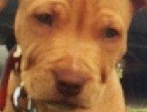 stolen pup