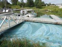 Lake Winnipeg algae