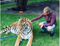 Justin Bieber tiger