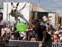 K-Days dog show