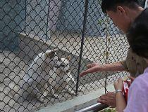 Dog Exhibit North Korea Zoo