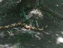 ajax snake