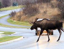 moose filer