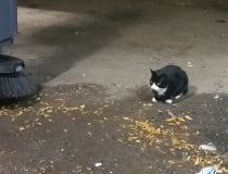 cats vs rats