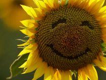 World Happinest Report