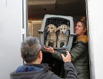 South Korean dog meat farm rescued