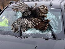 turkey windshield