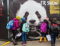 Calgary Zoo panda enclosure