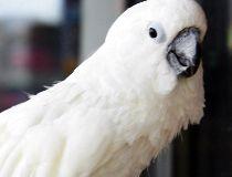 Cockatoo FILES May 29/17