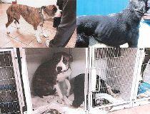 Jun yang vet dog trial