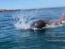 Seal vs. Octopus