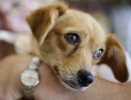 Dog Rescue Toronto Gta