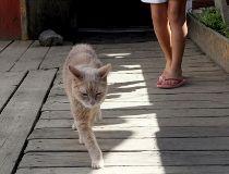 Stubbs Mayor Cat