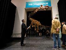 merican Museum of Natural History