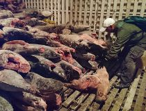 Galapagos marine animal remains
