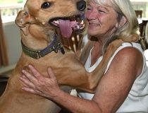 greyhound rescues