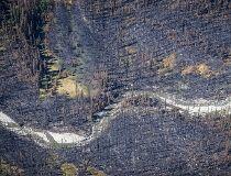 Verdant Creek forest fire