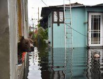 Hurricane Maria dog